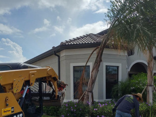tree removal estero fl
